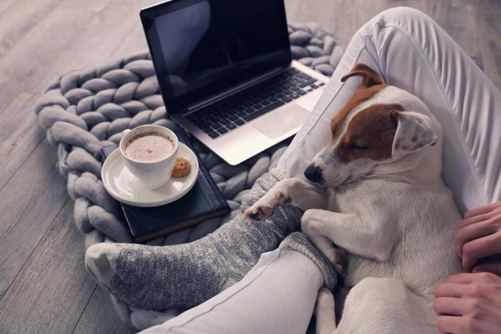 Snuggle up with your favorite dog, warm socks, and hot coffee because you'll need them if you require any fall furnace services.